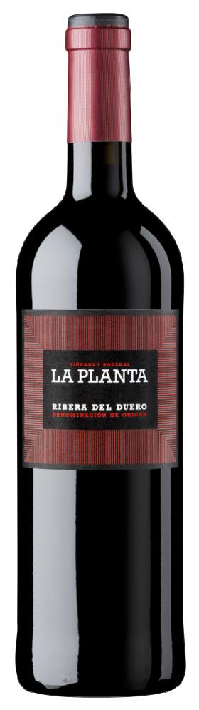 Arzuaga 2019 Ribera del Duero - LA PLANTA